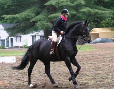 Equine Appraisals