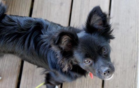 Adopt vs. Shop: adopting an animal could mean saving a life