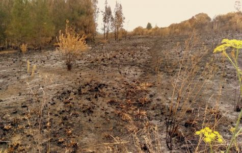In this picture, it shows the absolute destruction these devastating wildfires are doing to the wildlife in Australia.